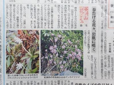ゲンカイツツジ・ショウジョバカマP3250001[1].jpg