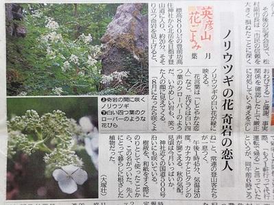 ノリウツギ・2018年8月22日西日本新聞.JPG