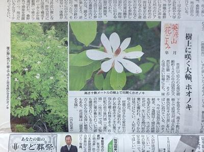 ホオノキ2018年5月11日西日本新聞P5110003.JPG