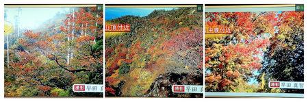 2020年10月14日NHKテレビPA140007 (1)_collage.jpg