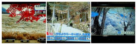 2020年11月17日NHKテレビPB170003 (1)_collage.jpg