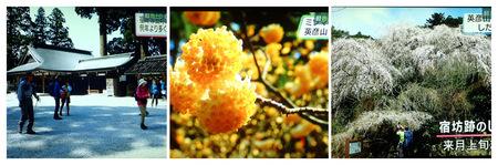 2020年3月22日NHKテレビP3220011_collage.jpg
