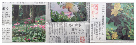 2020年6月2日読売新聞P6050058_collage.jpg