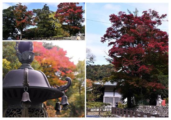 P1730902_collage.jpg