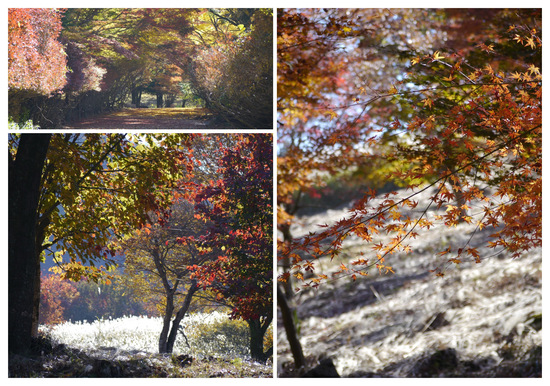 P1730941_collage.jpg